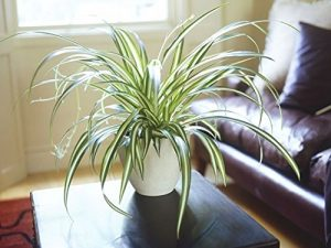 10 AIR PURIFYING INDOOR PLANTS ANYONE CAN GROW #DIY #HomeDecor #HousePlants #IndoorPlants #SmallHousePlans #BestIndoorPlants #Aircleaner #succulent plants indoor plants,air purifying indoor plants,clean air by plants,Life changing indoor plants,toxic chemicals found in the air,harmful gases found in home,toxic chemicals found in the indoors