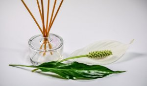 Essential Oils Is So Famous, But Why?: Essential oils uses, List of essential oils,essential oils benefits, essential oils good for skin, 10 рорulаr еѕѕеntіаl оіlѕ,essential oils and pregnancy,essential oils diffuser, essential oils headache, essential oils for sleep, essential oils for anxiety,essential oils anxiety, essential oils lavender,how to use essential oils,essential oils benefits